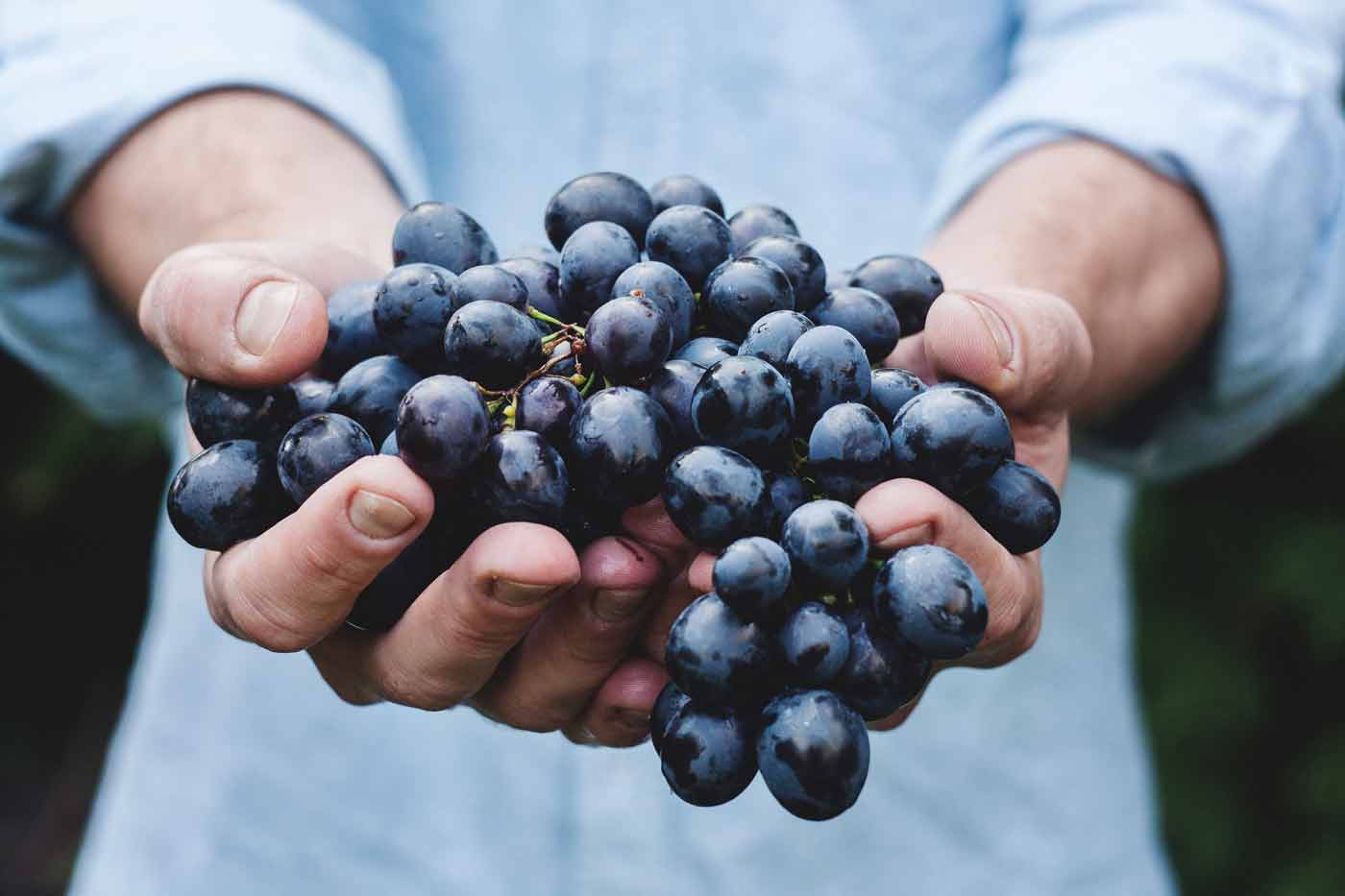 Transport frigorifique raisin