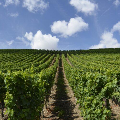 Transport de bouteilles de vin
