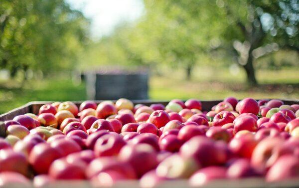 Transport de pommes au départ d'Arles